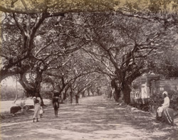 Mowbray Road, Adyar, Madras, 1902